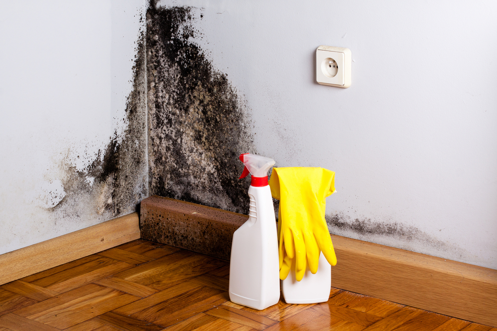 mold removal youngstown oh